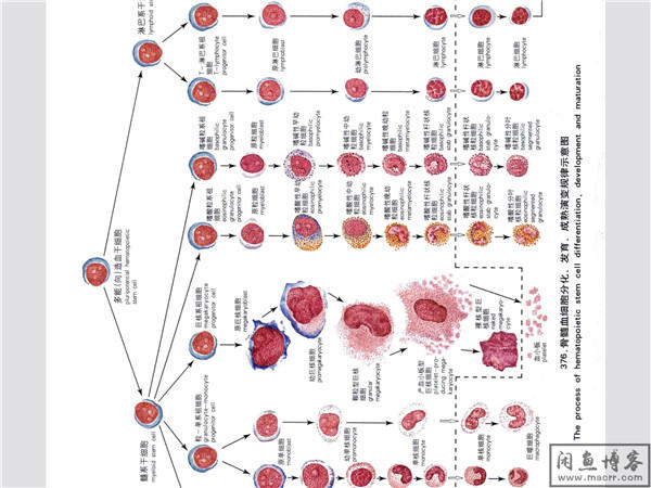 实验诊断学彩色图谱[叶千红](血液学检验+常规检验+微生物寄生虫)