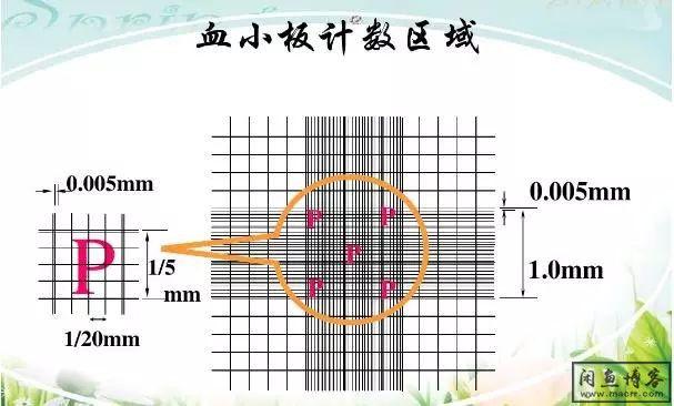 总结:检验各种细胞手工计数方法大全